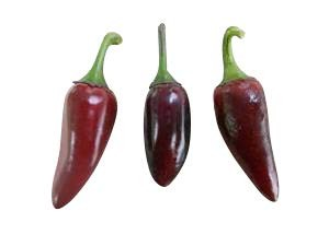 Jalapeno Purple 10 Samen