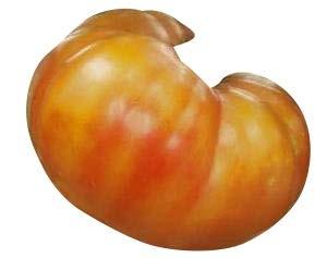 Tomate -Big Rainbow- 10 Samen