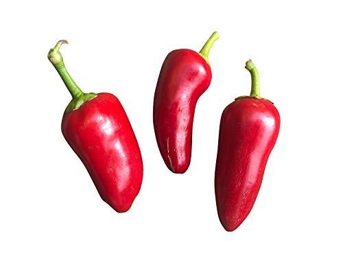 Chili Fresno Rot 10 Samen