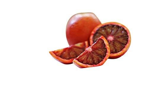 Blut Orangenbaum -Citrus × sinensis-  3 Samen