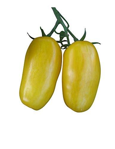 Tomate -Banana Legs- 10 Samen