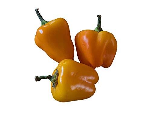 Paprika -Mini Bell Gelb- 100 Samen