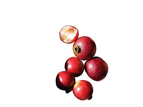Erdbeerguave -Psidium cattleianum- 10 Samen