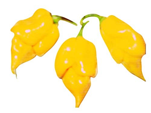 Trinidad Scorpion Gelb 10 Samen