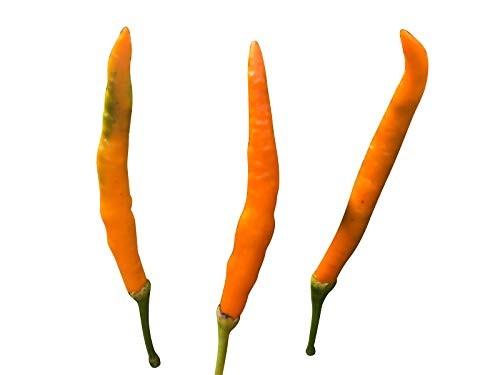 Orange Thai-Chili 10 Samen
