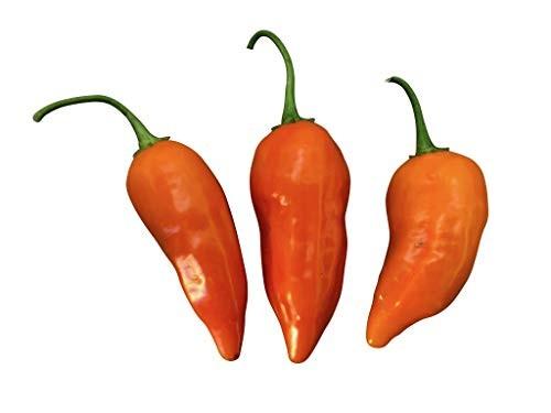 Jamy Chili  10 Samen