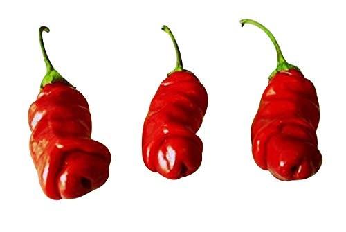 Peter Pepper Rot 10 Samen