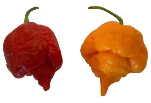 Die 4 schärfsten Chilis der Welt