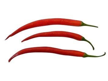 Cayenne Rot 10 Samen