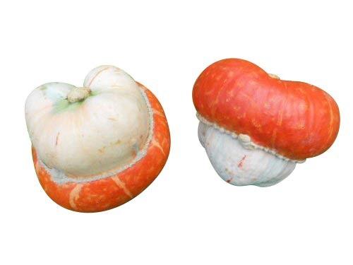 Speisekürbis Bischofsmütze 10 Samen