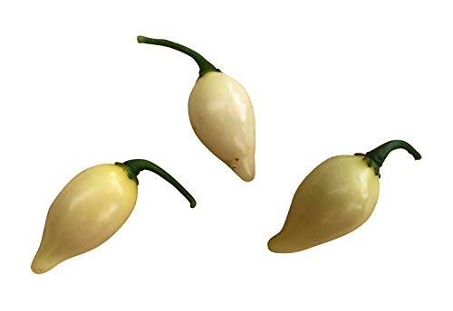 Chupetinho White 10 Samen