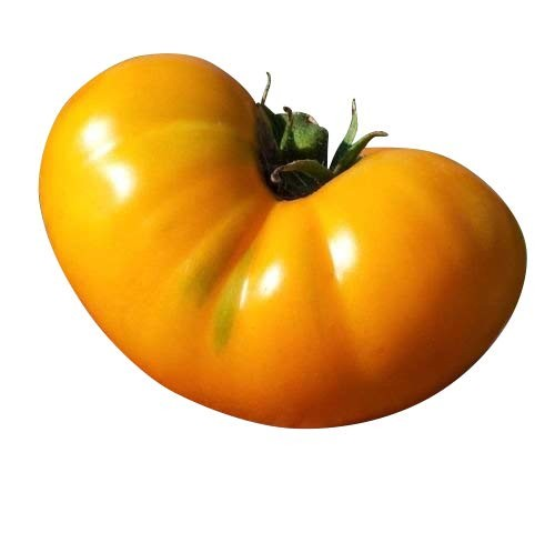 Tomate -AZOYCHKA- 10 Samen