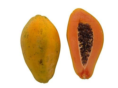 Melonenbaum Papaya -carica papaya- 1000 Samen