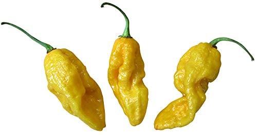 Devils Tongue Yellow 10 Samen