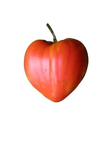 Ochsenherz Tomate 10 Samen