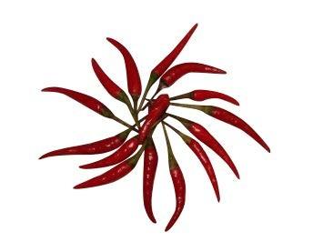 Thai Chili Rot -Zipfelmützenchili- 10 Samen