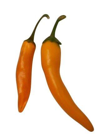Peperoni -Hot Carrot- Orange 10 Samen