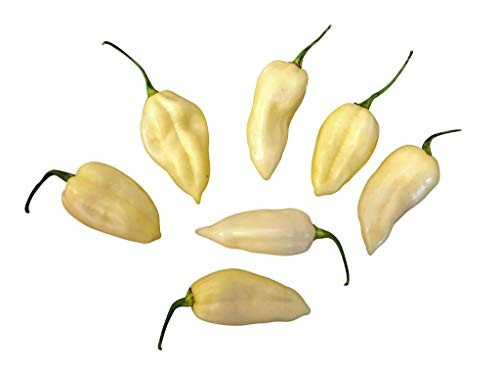 Fatalii Weiß 10 Samen
