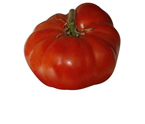 Tomate -Pantano Romanesco- 10 Samen