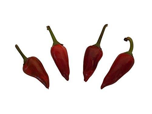 Pretty in Black Chili 10 Samen