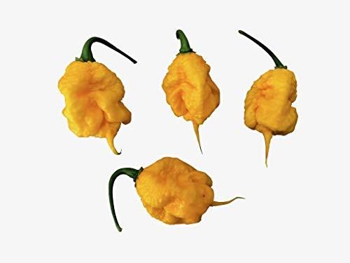 CAROLINA REAPER (Yellow) 10 Samen -Ultra scharfe Chili-Sorte-