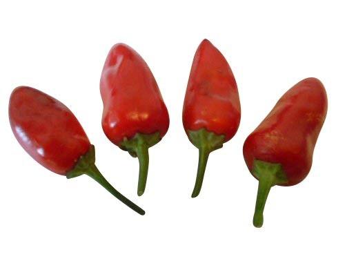 Feuerküsschen 10 Samen