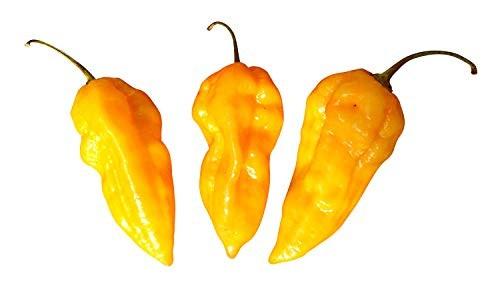 Bhut Jolokia Orange 10 Samen