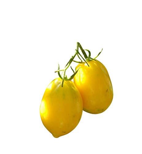 Zitronen Tomate -Plum Lemon- 100 Samen