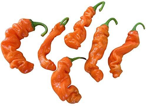 Peter Pepper Orange 10 Samen