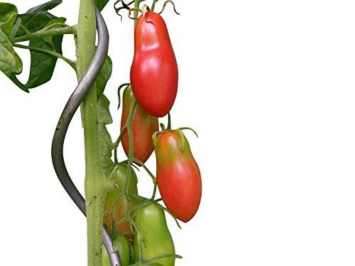 Tomate Himmelstürmer 10 Samen