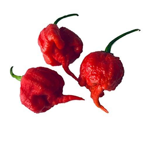 Carolina Reaper Rot 100 Samen