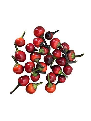 Chili -Black Pearl- 10 Samen