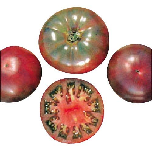 Tomate Cherokee Purple 10 Samen