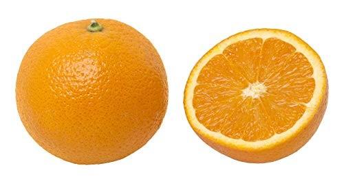 Echter Orangenbaum -citrus sinensis- 3 Samen