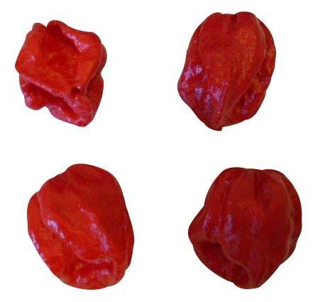 7 Pot Douglah Rot