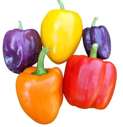 Paprika Samen Mix 60 Samen