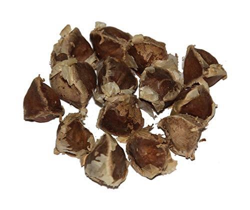 Meerrettichbaum -Moringa oleifera- 100 Samen