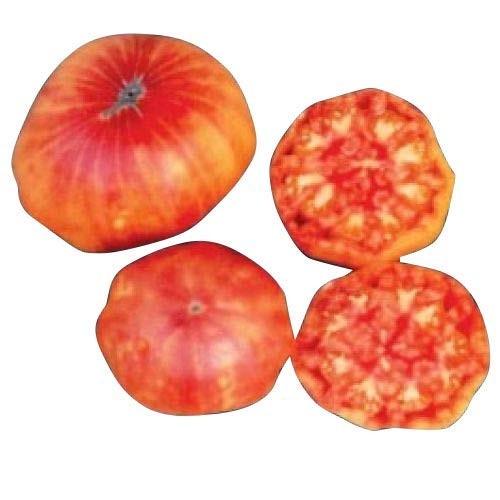 Tomate -Flame- 10 Samen