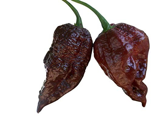 Trinidad Scorpion Chocolate 1000 Samen