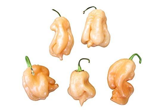 Trinidad Scorpion Peach 10 Samen