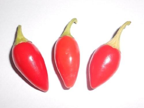 Thaichili (Thai-Big) 10 Samen **Super-Ertrag**