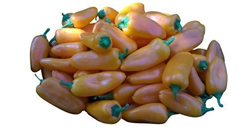 Snackpaprika Orange 10 Samen