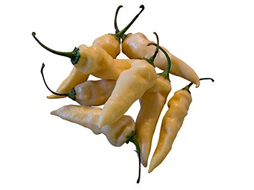 Bhut Jolokia Weiß 10 Samen