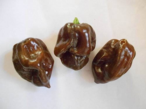 Trinidad Brown Scotch Bonnet 10 Samen