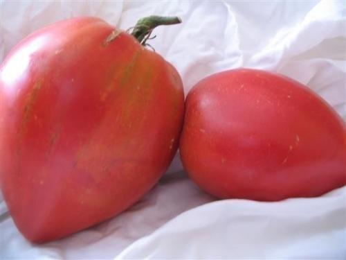 Tomate -Anna Russian- 10 Samen