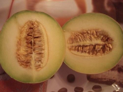 Galia Melone 10 frische Samen