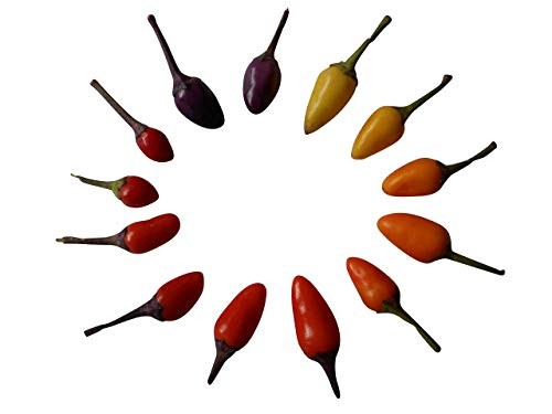 Bolivien Rainbow Chili  1.000 Samen