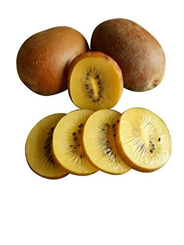 Kiwi Gelb 20 Samen
