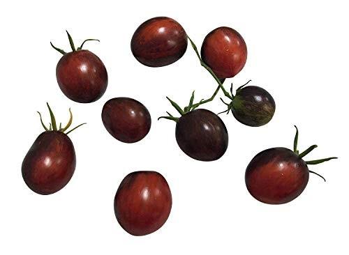 Tomate -Purple Dragon- 10 Samen