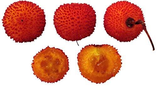 Erdbeerbaum -Arbutus unedo- 10 Samen